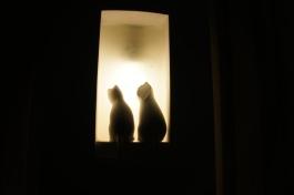 Two and a Half Cats at Wake & Bake, Shimla, India
