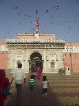 Flight of Pigeons at Karni Mata Temple