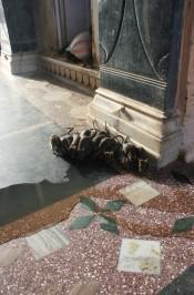 Rats at Karni mata temple