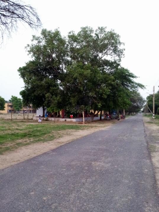 Temple under the Peepal Tree