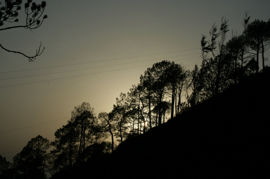 The trees of  Kasauli call me...