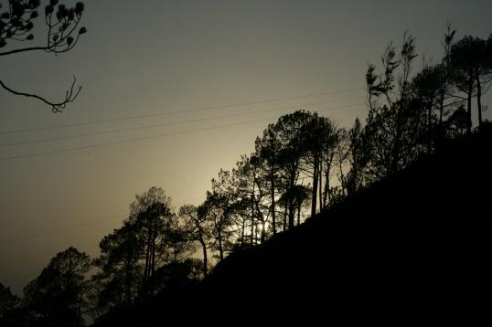 The trees of  Kasauli call me...