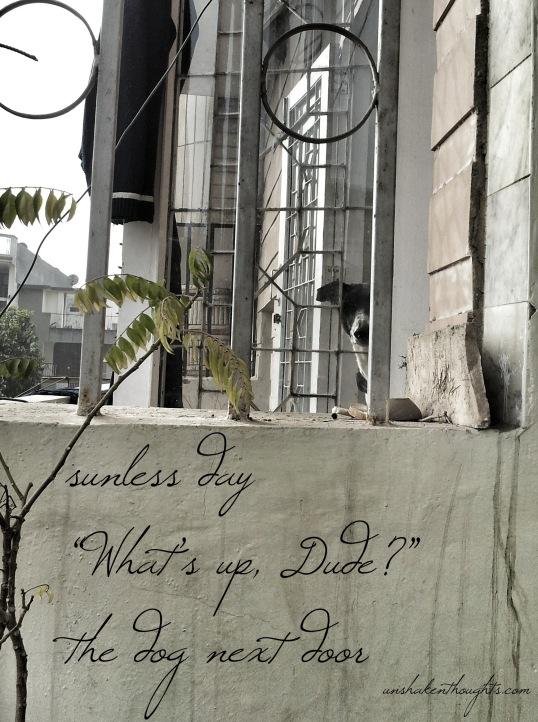 The dog next door haiku